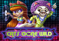 Cats gone wild
